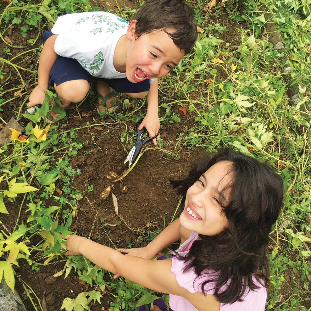 MOB-GFB-HarvestSweetPotatoLookUp-LVB-sm-20151015