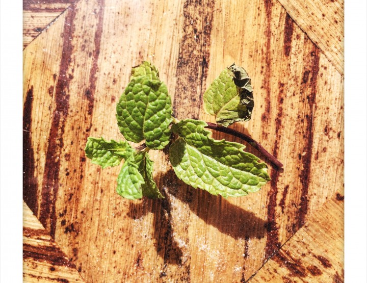 MINT: Allergen or Not An Allergen?