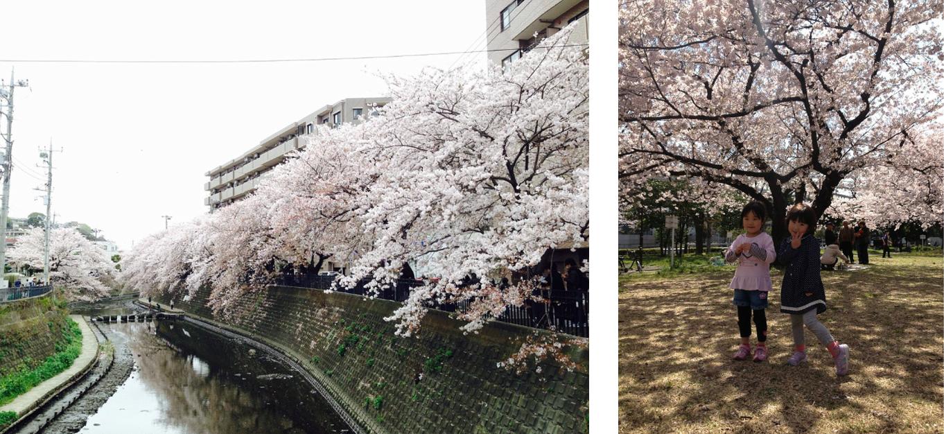 FreshStart-SakuraSpringInJapan
