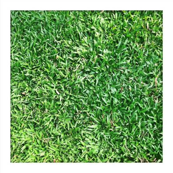 GRASS: Allergen or Not An Allergen?