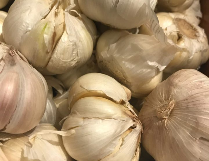 GARLIC: Allergen or Not An Allergen?