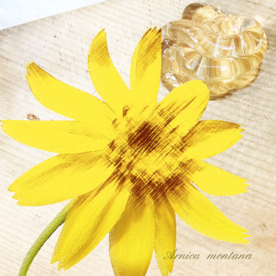 ARNICA: Allergen or Not An Allergen?