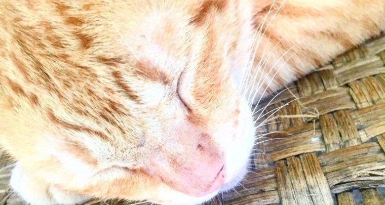 KITTY: Allergen or Not An Allergen?