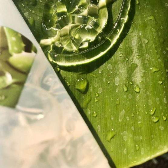 ALOE VERA: Allergen or Not An Allergen?