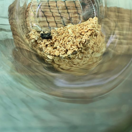 GRANOLA: Allergen or Not An Allergen?