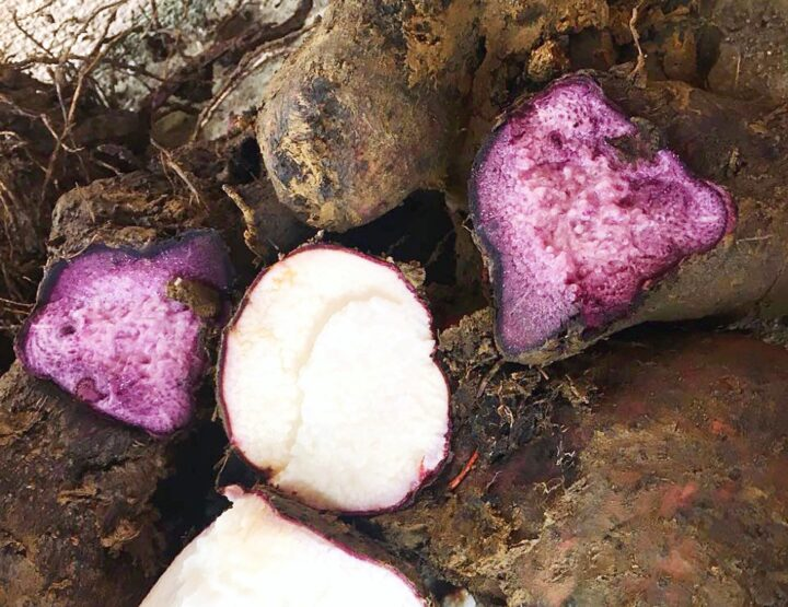UBE (Purple Yam): Allergen or Not An Allergen?